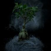 1-drzewko-szczescia