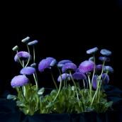 5-kwiaty-2
